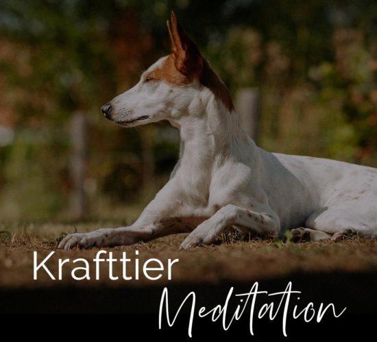 Krafttier Meditation Bild mit dem Hund Conchi Raab - Podenco