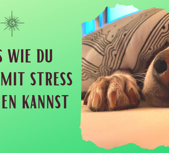 Podcast Titelbild zu Tipps wie du besser mit Stress umgehen kannst. Der Text steht auf grünem Hintergrund und es ist ein Bild von einer Hundeschnauze unter der Decke zu sehen